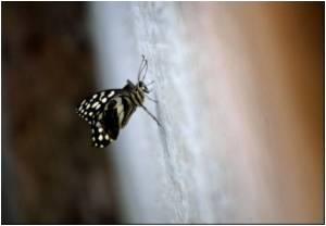 Taiwan: 'A Butterfly Desert'