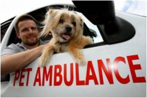 24-hour Pet Ambulance Service Becoming More Popular in Australia