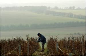 Climate Change Sparks Hunt for Cool Places for Vineyards