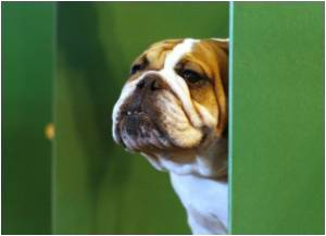 Brits Need to be Aware About Dog Breeding Concerns