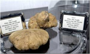 World's Most Expensive Truffle to Be Served at Exclusive Banquet in Hong Kong