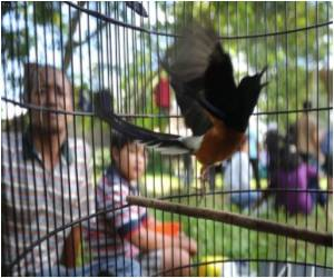 Ban on Import of Birds from Australia Lifted By UAE