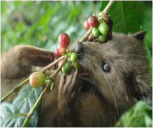 Bizarre: Civet 'Cat' Dung Secret to Indonesia Luxury Coffee