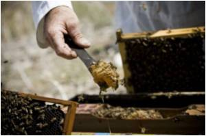Compounds In Honey That Boosts Immunity Identified