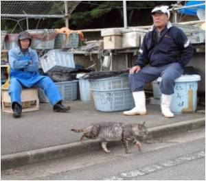 Japanese Island Swarming With Cats to Draw Tourists