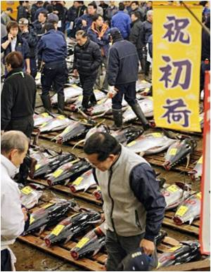 Giant Tuna Fetches A Record $1.8 Million In Japan