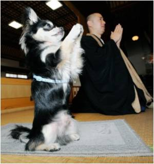 Praying Dog Attracts Crowd at Buddhist Temple