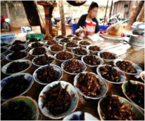 Study Asks Are Insects the Answer to Global Malnutrition?