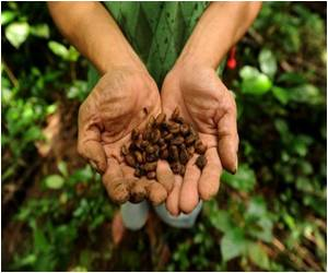 Civet Coffee Dung Brings Unexpected Bonanza to Philippine Farmers