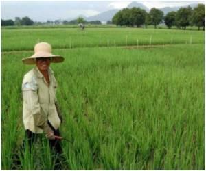 Maize Gene In Switchgrass – Future Of Biofuel