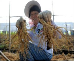 Health-giving Herb Ginseng Honored by South Koreans