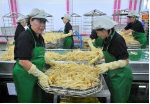 Korea's Red Ginseng Has Ever-growing Fan Club