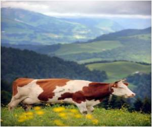 Greenhouse Gas Emissions Not Entirely Due to Dairy Cows