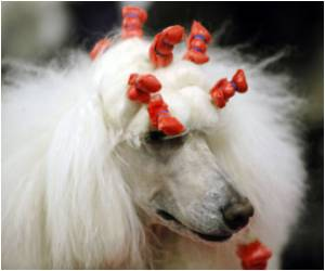 NY Dog Show Dazzled By Canine Beauties