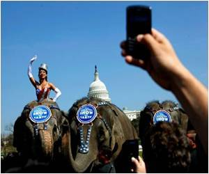 Elephants Law Being Viewed Skeptically by US Circuses