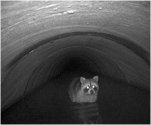 Under US Roads, Wildlife Finds Path to Safety