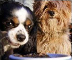 Mysterious Illness Affects Dogs