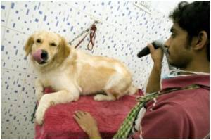 First Blood Bank for Dogs Launched in India