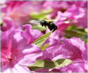 Bees may Help Improve Robotic Vision: Study