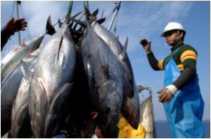 Record Price of 396,000 Dollars for Giant Tuna in Japan