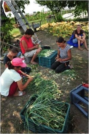 Debate Over Organic Food
