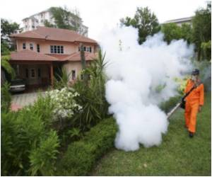 Malaysia Mulls Releasing GM Mosquitoes to Combat Dengue Fever