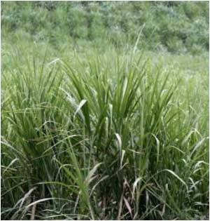 Record High Prices of Sugar, Grain