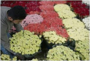 Israel Grants Special Approval of Gaza Flowers for Valentine's