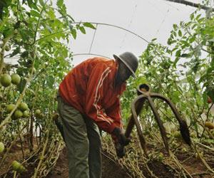 Nairobi Criminals Go Organic