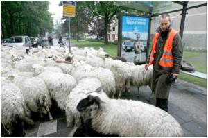 New Cases Has Widened Netherland's Bluetongue Security Zone