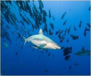 Palau: a Rare Haven for Endangered Sharks
