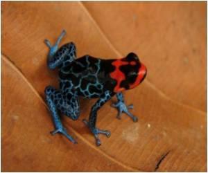 Peru's Rich Biodiversity Threatened by Discovery