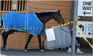 Quarantine Failure Blamed for Equine Flu Outbreak in Australia