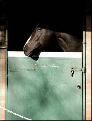 Australian PM Announces Horse Flu Inquiry