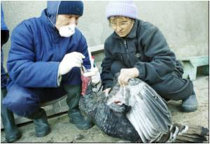 Romania's Bird Flu Test Results Proved Negative