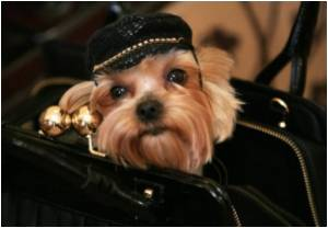 Russia's Canine Chic Defies Crisis