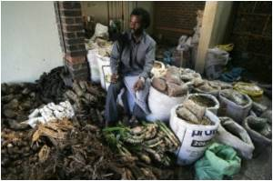 South African Traditional Healers Being Trained for Modern Medicine