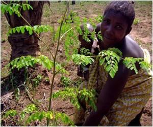 Miracle Plant in Sierra Leone