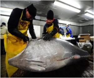 Tuna Vanishes In Sushi Bars