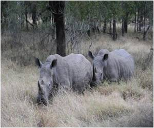 Rhinos to be Extinct by 2020: Experts