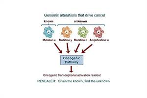 New Computer Algorithm may Uncover Hidden Genomic Variations in Cancer