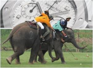 Elephant Polo Stats Will No Longer Feature in Guinness Records After PETA Lobbying