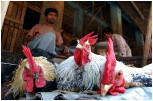 Bird Flu Outbreak in Japan