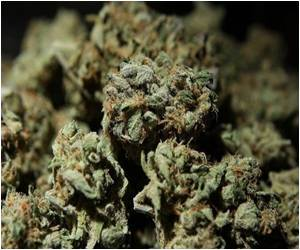 Violence Due to Drugs may Reduce by Decriminalizing Marijuana