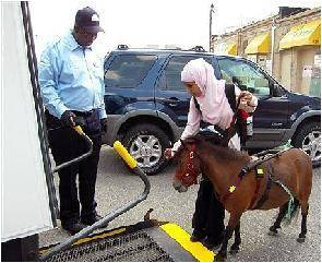 Blind US Muslim Woman Uses Tiny Horse as Guide
