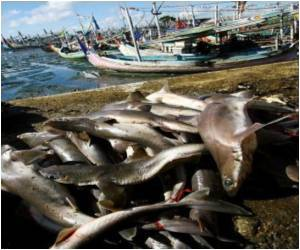 Hong Kong Pays Little Heed to US Shark Fin Restrictions