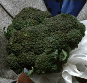 Basis for Broccoli's Cancer-Fighting Ability may be a Biochemical
