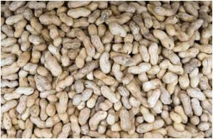 Peanut Plant Knew Their Product Is Tainted With Salmonella