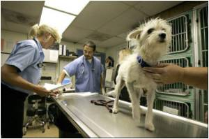 Rabies Eradicated from U.S Dog Population