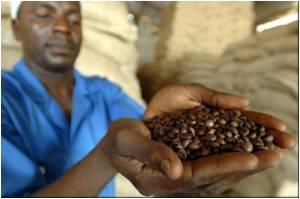 Coffee Grounds: Future Energy Resource